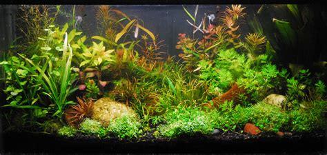 aquarium fish and plants aquarium plants decorations 4240115 3334x1584 all for desktop