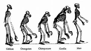 Why Is Evolution Still Debated?   Science-ology