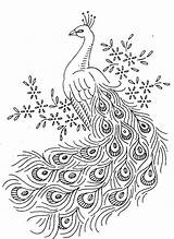 Peacock Coloring Pages Bird Birds Animals Knowing Kind Name sketch template