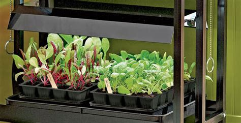 growing vegetables indoors with led lights gardening under lights grow lights grow light shop