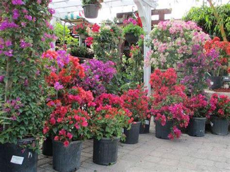 olive garden coral springs top garden centers in south florida 171 cbs miami