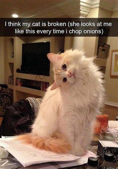 cat memes    laugh   cry fallinpets