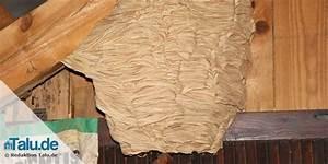 Wie Vertreibe Ich Wespen : kleines wespennest entfernen gallery of wespen berall ~ Orissabook.com Haus und Dekorationen
