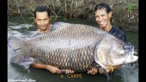 top 10 des plus gros poissons du monde