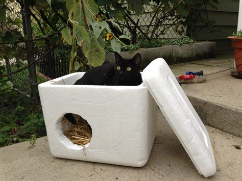 Volunteers Build Small Shelters For Feral Cats Diy Valentines Ideas For Him Fabric Panels Easy Furniture Lowes Projects Tin Man Costume Turtle Habitat Bedroom Wall Decor Butcher Block Cutting Board