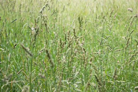 Winlawn Lawn Care Guide
