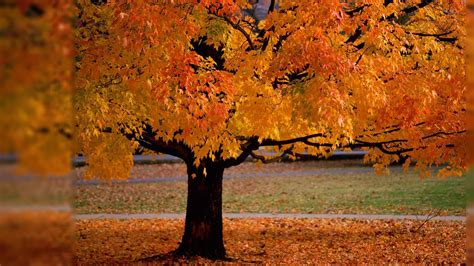 Fall Backgrounds For Desktop Computers by Fall Computer Wallpaper Backgrounds Wallpaper Cave