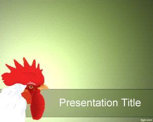 sebrights chicken powerpoint template  template