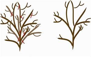 Brantley Snipes Landscape   Design  Proper Pruning