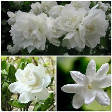 10 Of The Most Fragrant Flowers In The Review