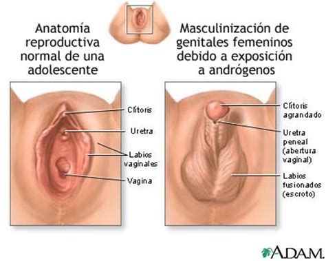 bloque2 anatomia sexual