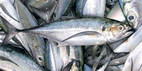 Kerala Fishing Boat Operators Association by Kerala S Seafood Export Companies Get That Sinking Feeling