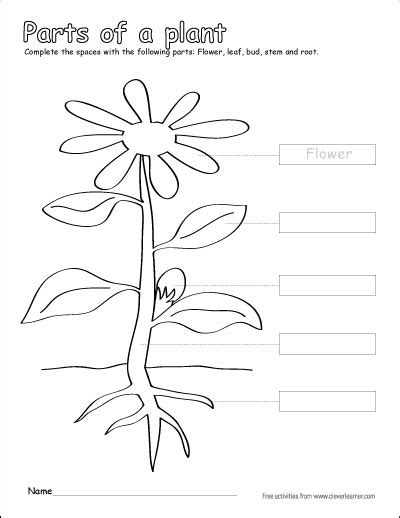 label  color  parts   plant