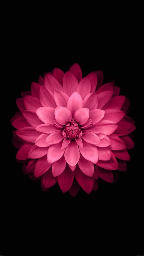 ad apple red lotus iphone  ios flower wallpaper