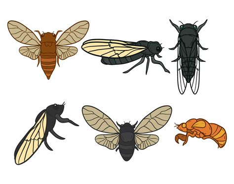 cicada vector set   vector art stock