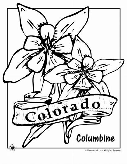 Colorado State Flower Coloring Pages Oregon Columbine
