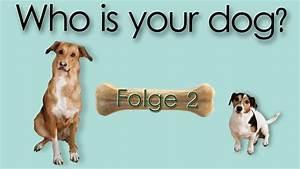 Ich Suche Einen Großen Hund : ich will einen hund helft mir ich will einen hund 2019 ~ Jslefanu.com Haus und Dekorationen