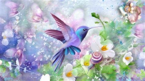 delightful hummingbird birds animals background