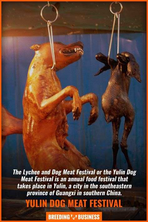 yulins lychee  dog meat festival    outrage