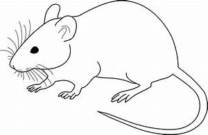 File Vector Diagram Of Laboratory Mouse  Black And White