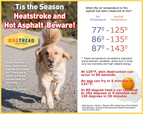will a heat l keep a dog warm exercise your canine inside during weather with a dog