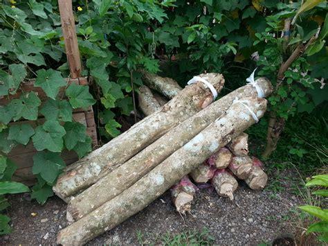 Pilze Im Garten Selber Züchten by Pilzzucht Auf Den Philippinen Pilzzucht Pilze Selber