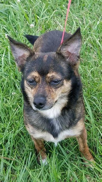 animal rescue   dogs  adoption cat adoption