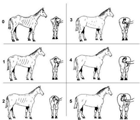 vitamine b paard