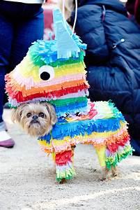 costumes pet ideas
