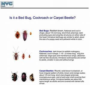 Please tell me this is not a bed bug Page 3 BabyCenter