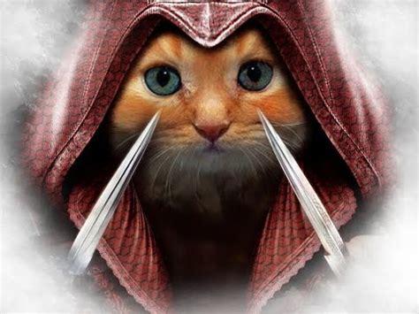 gato haciendo parkour assassins cat youtube