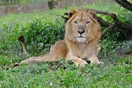 Nigeria Wildlife Animals