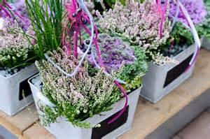 winterharte pflanzen fã r den balkon winterharte pflanzen für den balkon bersicht winterharte pflanzen f r den balkon sch ner wohnen