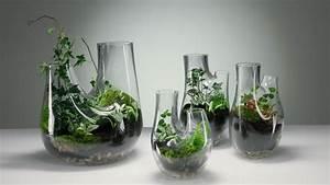 Tulpen Im Glas Ohne Erde : mini garten wie pflanzen im glas gedeihen ~ Frokenaadalensverden.com Haus und Dekorationen