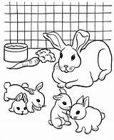 Coloring Rabbit Pages Printable Pet Colouring Rabbits Bunny Breeding Pets Popular Coloringhome Library Clipart Ocoloring sketch template