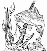 Pyrography Fishinghacks sketch template
