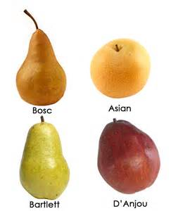 Pear Types Fruit Varieties