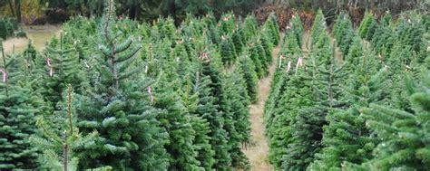 precio de los arboles cortados de navidad 2 lugares para comprar tu 225 rbol de navidad cerca de la cdmx m 233 xico desconocido