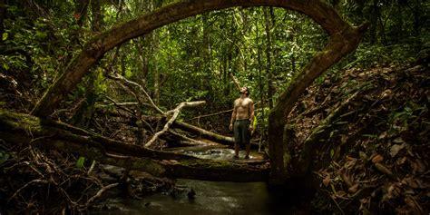 tamandua rainforest expeditions