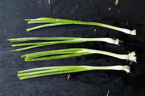 what is a scallion how to buy and use scallions