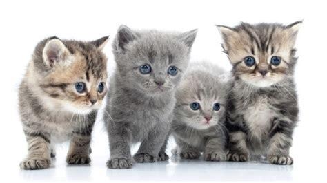 altes haus kaufen was ist zu beachten sat 1 ratgeber katzen kaufen was sollte beachten