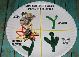 Sunflower Life Cycle  Free Printable Math Sticks Topper