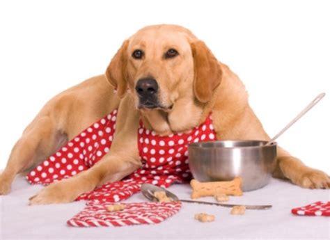 cuisiner le thon en boite gateaux chien a faire soi meme fanimo
