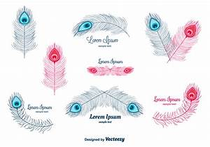 Peacock Feather Vector - Download Free Vector Art, Stock ...