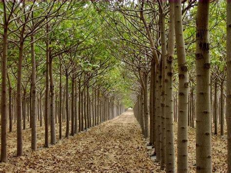 Pemët sjellin përfitime për të luftuar ngrohjen globale ...