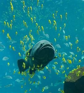 Aquatic feeding mechanisms - Wikipedia  Aquatic