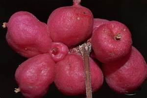 Slimfruit pillen