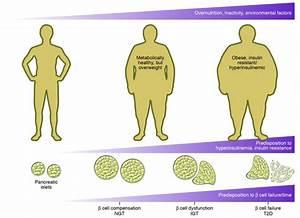 Как избавиться от холестерина в крови при сахарном диабете
