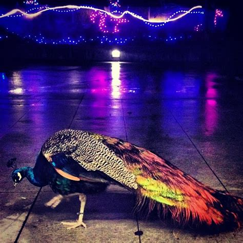 zoo lights seattle top 10 reasons to visit wildlights woodland park zoo