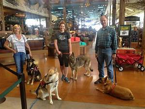 gallery dog training in henderson and las vegas With therapy dog training las vegas